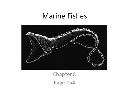Marine Fishes Chapter 8 Page 154. Vertebrates Subphylum Vertebrata Four fundamental characteristics: – Have a backbone (Vertebral Column or spine with.