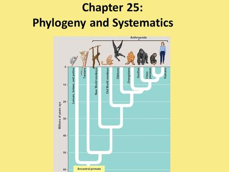 Chapter 25: Phylogeny and Systematics. phylogeny – evolutionary history of a species or group of species.