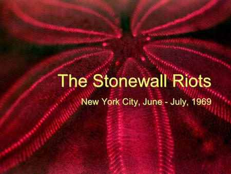 The Stonewall Riots New York City, June - July, 1969.