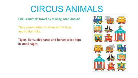 CIRCUS ANIMALS Circus animals travel by railway, road and air. They were beaten to show who's boss and to do tricks. Tigers, lions, elephants and horses.