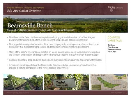 The Beamsville Bench is the narrow plateau sloping gradually from the cliff of the Niagara Escarpment marking the bottom of the crescent-shaped Lake Iroquois.