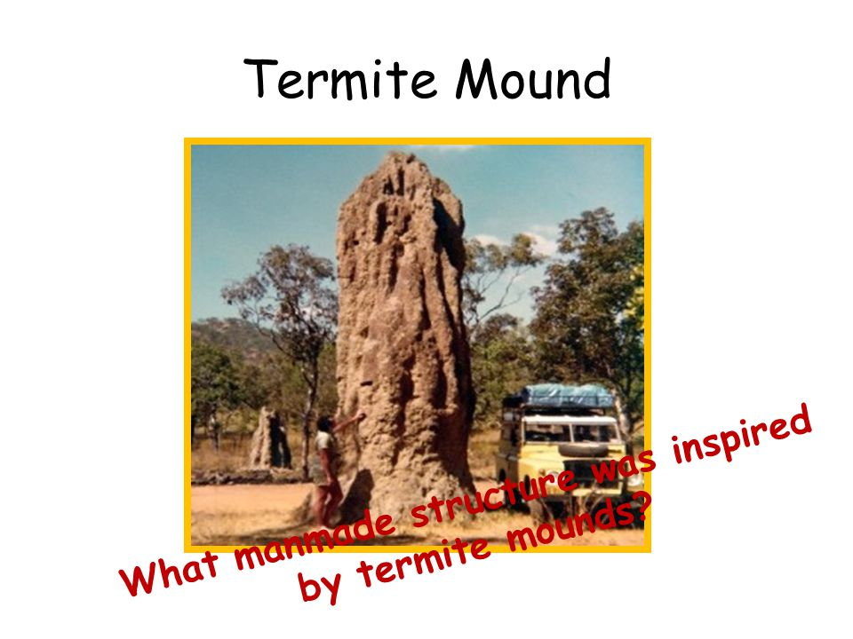 Termite Mound Bio-mimicry: The Eastgate Center (Harare, Zimbabwe)