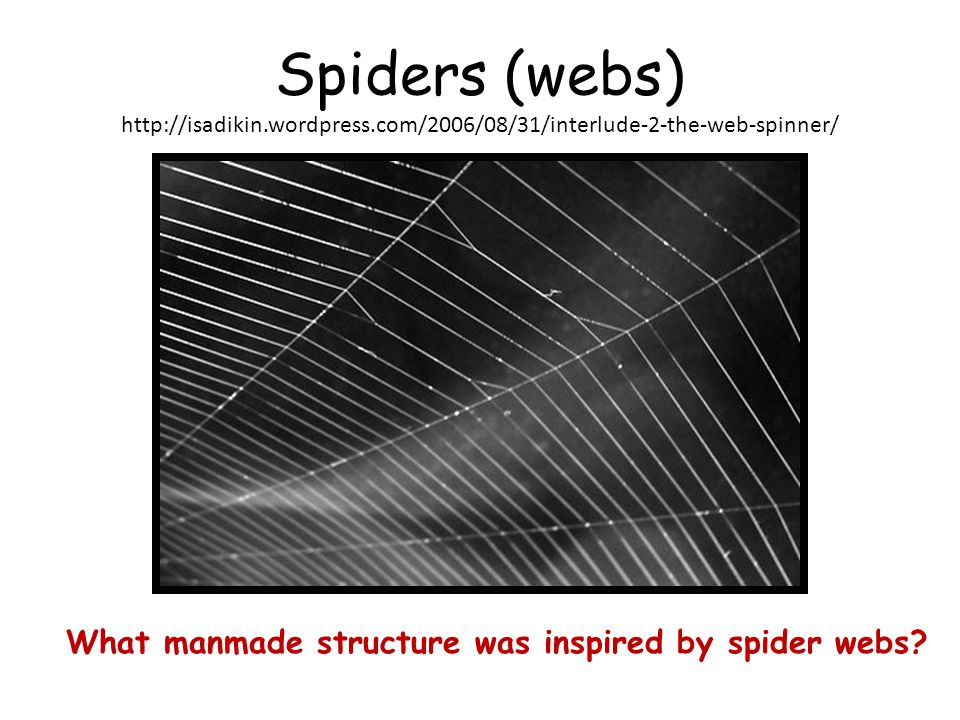 Spiders (webs)