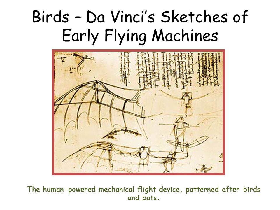 Birds – Da Vincis Sketches of Early Flying Machines