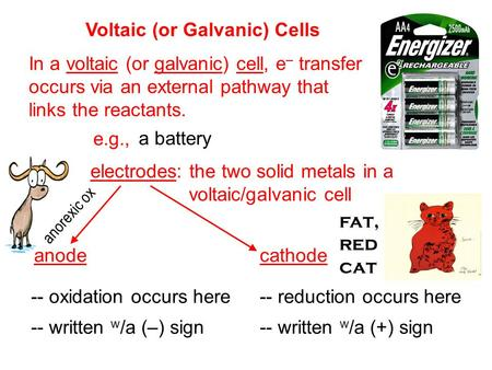 Anorexic ox -- oxidation occurs here Voltaic (or Galvanic) Cells In a voltaic (or galvanic) cell, e – transfer occurs via an external pathway that links.