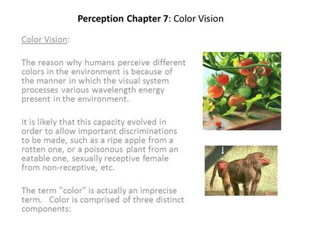 Perception Chapter 7: Color Vision Color Vision: The reason why humans perceive different colors in the environment is because of the manner in which the.