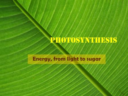 Photosynthesis Energy, from light to sugar. Photosynthesis Photosynthesis is the process by which the energy of a photon is captured and stored in the.