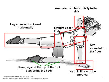 Straight upper body Arm extended to the floor Knee, leg and the top of the foot supporting the body Arm extended horizontally to the side Hand in line.