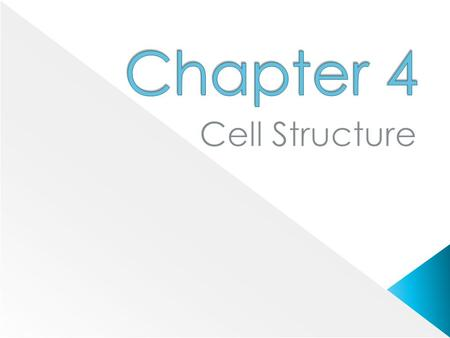 Chapter 4 Cell Structure.