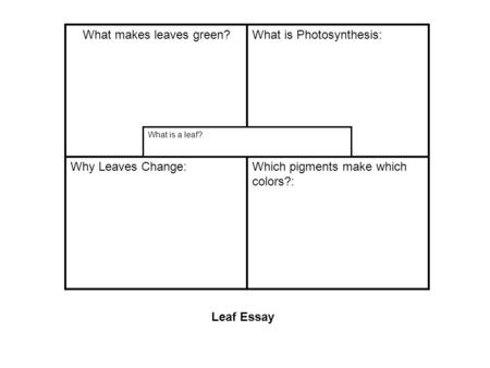 What makes leaves green?What is Photosynthesis: Why Leaves Change:Which pigments make which colors?: What is a leaf? Leaf Essay.