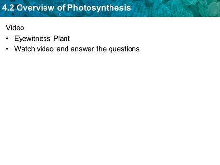 Video Eyewitness Plant Watch video and answer the questions.