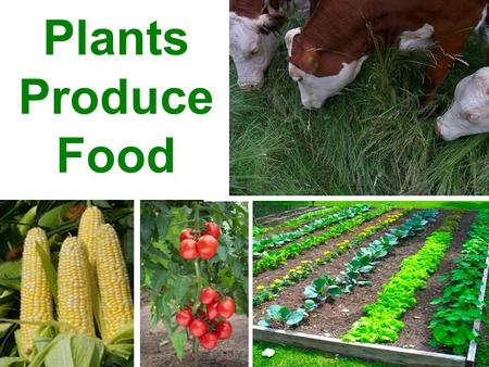 Plants Produce Food. Every organism on Earth needs energy to live and grow.
