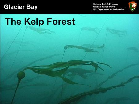 Glacier Bay National Park & Preserve National Park Service U.S. Department of the Interior The Kelp Forest.