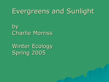 Evergreens and Sunlight by Charlie Morriss Winter Ecology Spring 2005.
