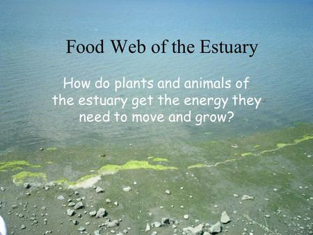 Food Web of the Estuary How do plants and animals of the estuary get the energy they need to move and grow?