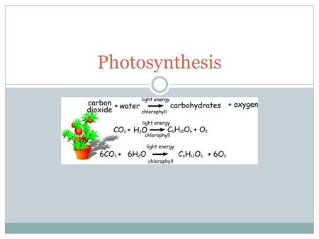 Photosynthesis. Which of the following is a product of photosynthesis? A. Water B. Glucose C. Carbon Dioxide D. Sunlight.