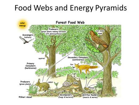 Food Webs and Energy Pyramids. Objectives Identification of the feeding relationships of animals in an ecosystem Tracing the flow of energy and nutrients.