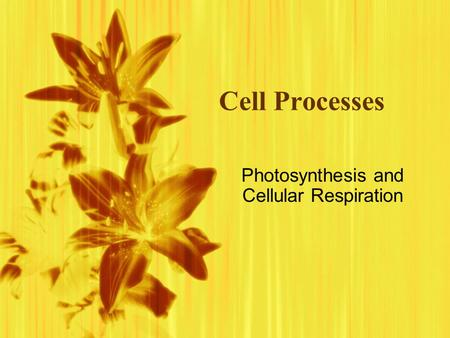 Cell Processes Photosynthesis and Cellular Respiration.