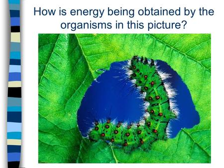How is energy being obtained by the organisms in this picture?
