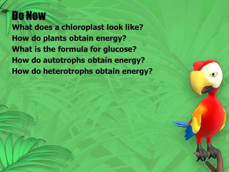 Do Now What does a chloroplast look like? How do plants obtain energy? What is the formula for glucose? How do autotrophs obtain energy? How do heterotrophs.