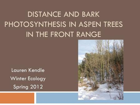 DISTANCE AND BARK PHOTOSYNTHESIS IN ASPEN TREES IN THE FRONT RANGE Lauren Kendle Winter Ecology Spring 2012.