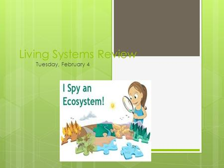 Living Systems Review Tuesday, February 4. Many animals in an ecosystem depend on other animals for — A. air B. energy C. shelter D. water.