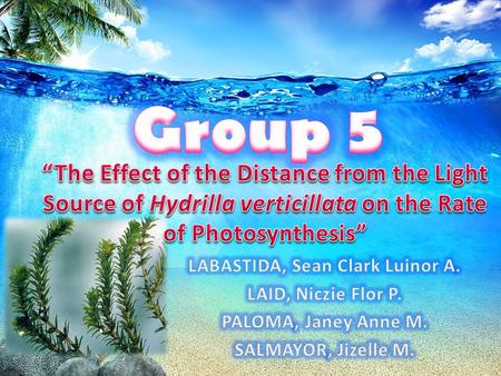 effect of light colour on the rate of photosynthesis Different wavelengths of light affect on  the effect of light intensity on the rate of  more about different wavelengths of light affect on photosynthesis.