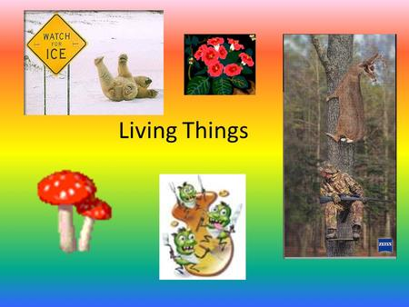 Living Things S7L4 Students will examine the dependence of organisms on one another and their environment.