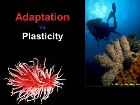 Adaptation vs Plasticity. The Problem: People often wish to jump to the conclusion that a trait change they see is the result of adaptation However, that.