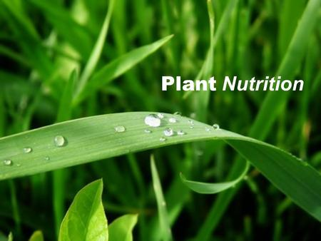 plant ap biology essays If you are interested in taking the biology ap exam, read on for a breakdown of  the  this section is divided into two long essays, one of which is lab or  if a  nutrient has a positive effect on one plant, can you appropriately.