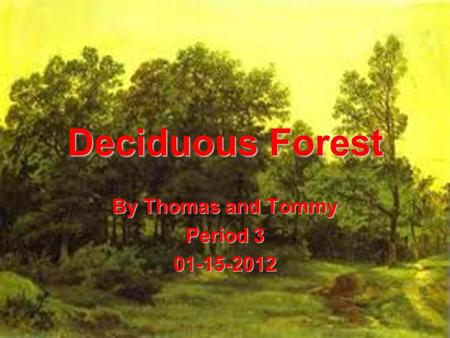 Deciduous Forest By Thomas and Tommy Period 3 01-15-2012.