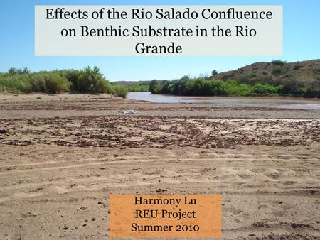 Effects of the Rio Salado Confluence on Benthic Substrate in the Rio Grande Harmony Lu REU Project Summer 2010.