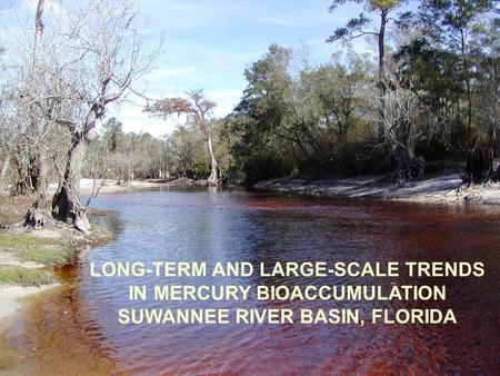 LONG-TERM AND LARGE-SCALE TRENDS IN MERCURY BIOACCUMULATION SUWANNEE RIVER BASIN, FLORIDA.