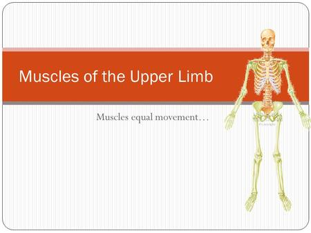 Muscles equal movement… Muscles of the Upper Limb.