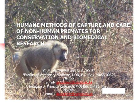HUMANE METHODS OF CAPTURE AND CARE OF NON-HUMAN PRIMATES FOR CONSERVATION AND BIOMEDICAL RESEARCH. G. M. MUCHEMI 1 and D. S. YOLE 2 1 Faculty of Veterinary.