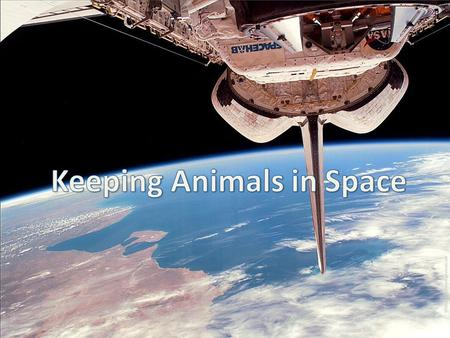 An animal's habitat consists of the natural environment in which it lives. In order to take animals into space we must artificially provide the animal.