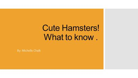 Cute Hamsters! What to know. By: Michelle Chalk. Basic Info on hamsters:  They are very popular house pets  Hamsters are easy to care for  Love interacting.