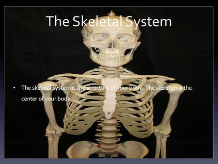 The Skeletal System The skeletal system is the structure of your body. The skeleton is the center of your body.