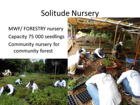 Solitude Nursery MWF/ FORESTRY nursery Capacity 75 000 seedlings Community nursery for community forest.