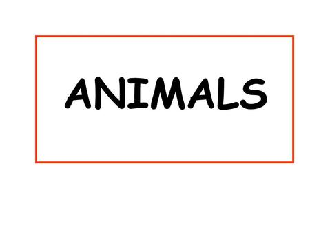 ANIMALS Bears and pigs and Kangaroos are all ANIMALS.