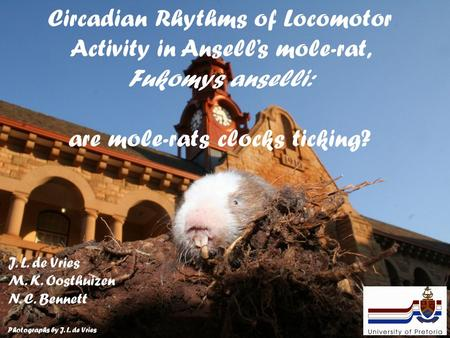 Circadian Rhythms of Locomotor Activity in Ansell's mole-rat, Fukomys anselli: are mole-rats clocks ticking? J. L. de Vries M. K. Oosthuizen N. C. Bennett.