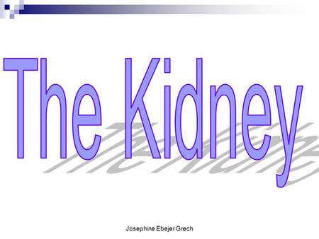 Josephine Ebejer Grech. The Kidneys Your kidneys are two bean- shaped organs, each about the size of your fist. They are located in the middle of your.