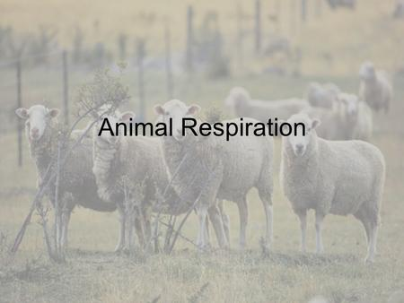 Animal Respiration Function of Respiratory System To obtain and use oxygen To eliminate carbon dioxide.