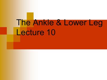 The Ankle & Lower Leg Lecture 10. Lower leg and ankle ankle injuries most frequent in sports tibia is major weight bearing bone of the lower leg fibula.