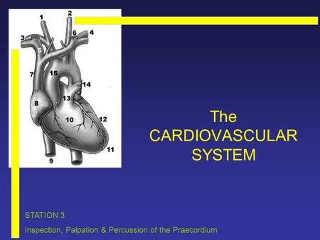 The CARDIOVASCULAR SYSTEM STATION 3 Inspection, Palpation & Percussion of the Praecordium.