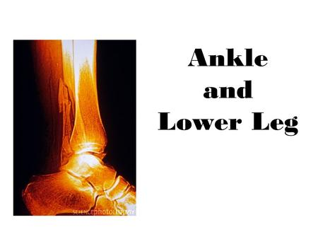 Ankle and Lower Leg.