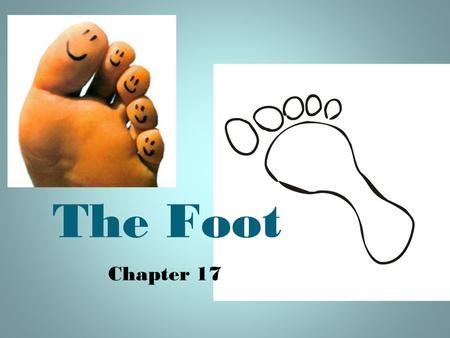 The Foot www.peakorthopedics.com/book/export/html/45 Chapter 17.