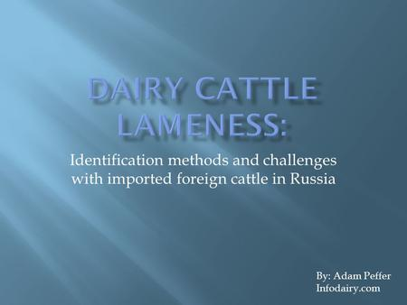 Identification methods and challenges with imported foreign cattle in Russia By: Adam Peffer Infodairy.com.