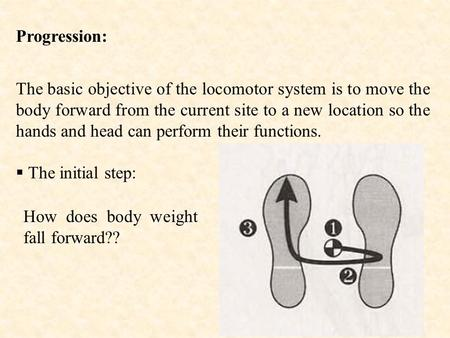 Progression: The basic objective of the locomotor system is to move the body forward from the current site to a new location so the hands and head can.