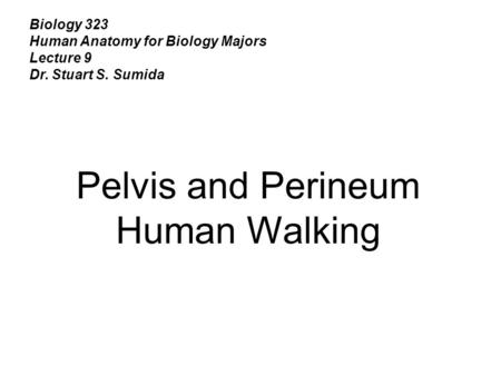 Biology 323 Human Anatomy for Biology Majors Lecture 9 Dr. Stuart S. Sumida Pelvis and Perineum Human Walking.